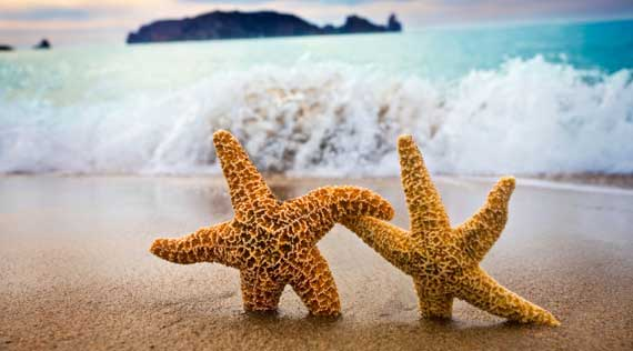 Manifesting ~ One starfish at a time!